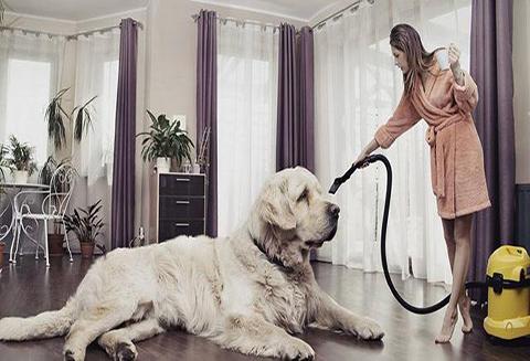 【北疆硅藻泥】让硅藻泥解决养宠物后家里味道很难闻问题